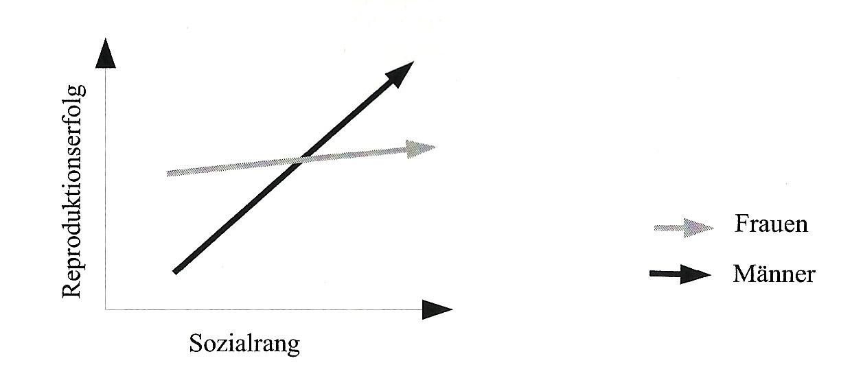 """""""Sozialer Status und Reproduktionserfolg"""" (nach Voland, 2000, S. 268)"""