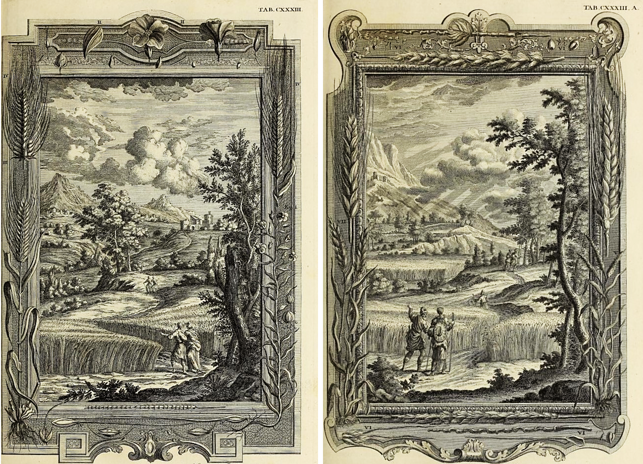 Image 4: J. Fredrich: Flax and Barley (Exodus 9: 31); M. Tyroff, Emmer and Wheat (Exodus 9:32). Copper-plated engravings on paper, 10 ¼ x 16 inches; Johann Scheuchzer, Physica Sacra (1731-1735).