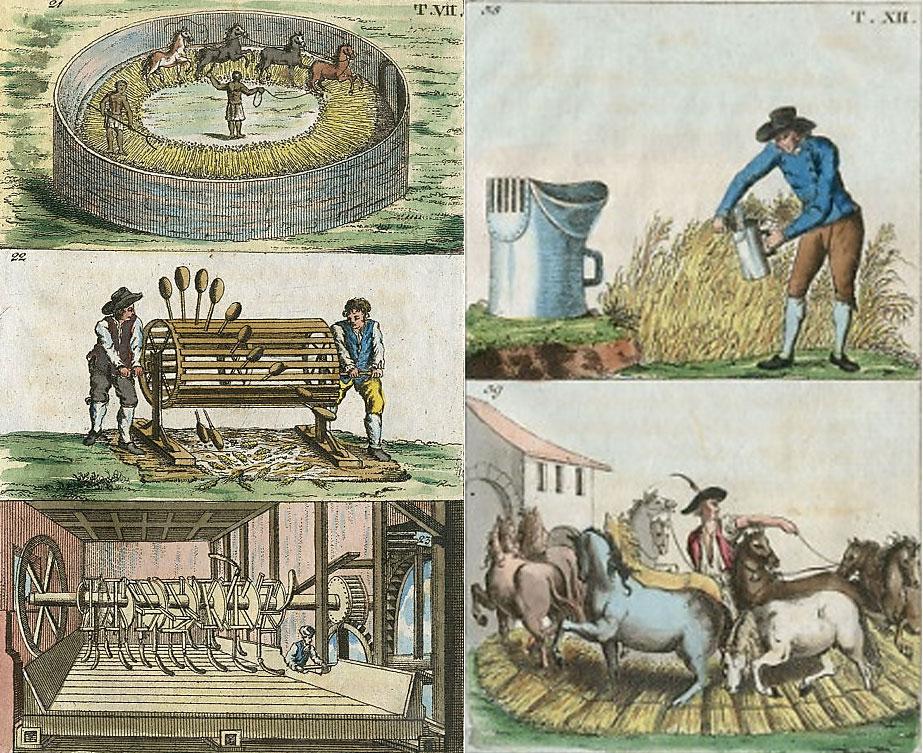 """Image 5: Attributed to Jacob Xaver Schmutzer, """"Methods of Threshing and Flailing Grain""""; Hand-colored engravings, 3 ¾ x 6 ½ inches; Gottlieb Tobias Wilhelm: Unterhaltungen aus der Naturgeschichte (Augsburg, 1810)."""